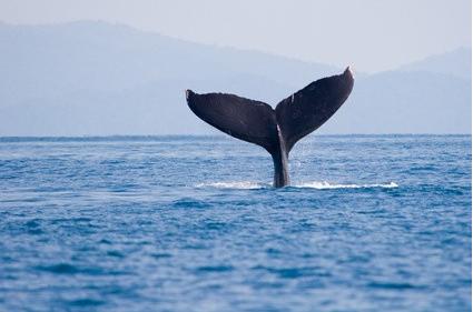 Les baleines de Puntarenas, Costa Rica